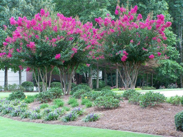 Crape myrtle landscaping ideas crape myrtle trees for Garden trees shrubs