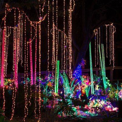 Houston Zoo Christmas Lights Pictures Zoo Lights Christmas Lights Christmas Light Displays