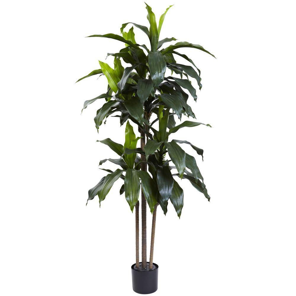 5 ft. Indoor/Outdoor UV Resistant Dracaena Plant, Green   Dracaena ...