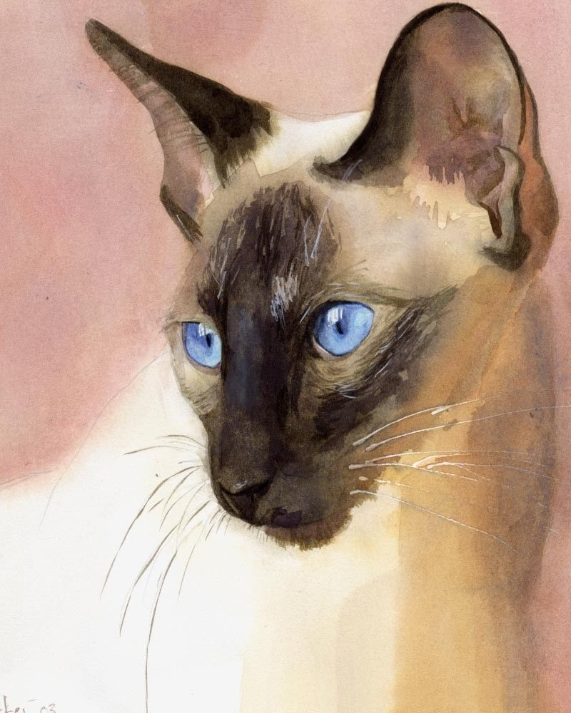 Giclee Print Of Siamese Cat Watercolor Painting Art Gaze Chocolate Seal Point Watercolor Cat Cat Painting Siamese Cat Tattoos