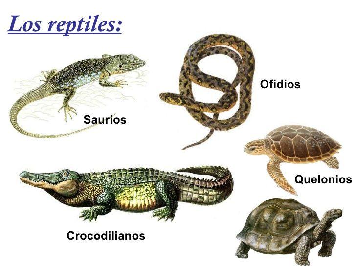 Q Son Los Reptiles los-animales-vertebrad...