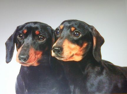 Police Seek New Leads In Search For Stolen Dogs Black And Tan