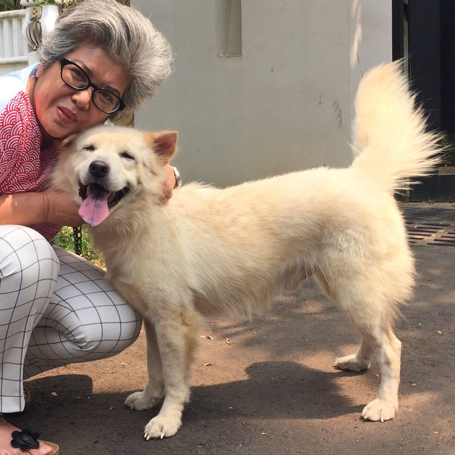 Benigno von balinese dog