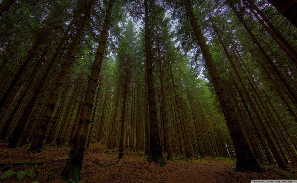 Twilight Forest Hd Wallpaper
