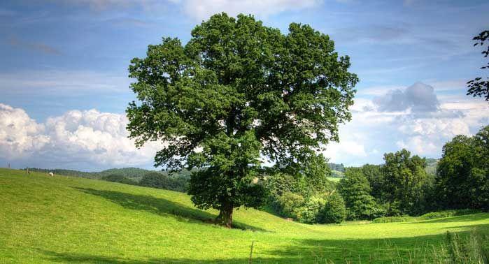 árbol de los problemas
