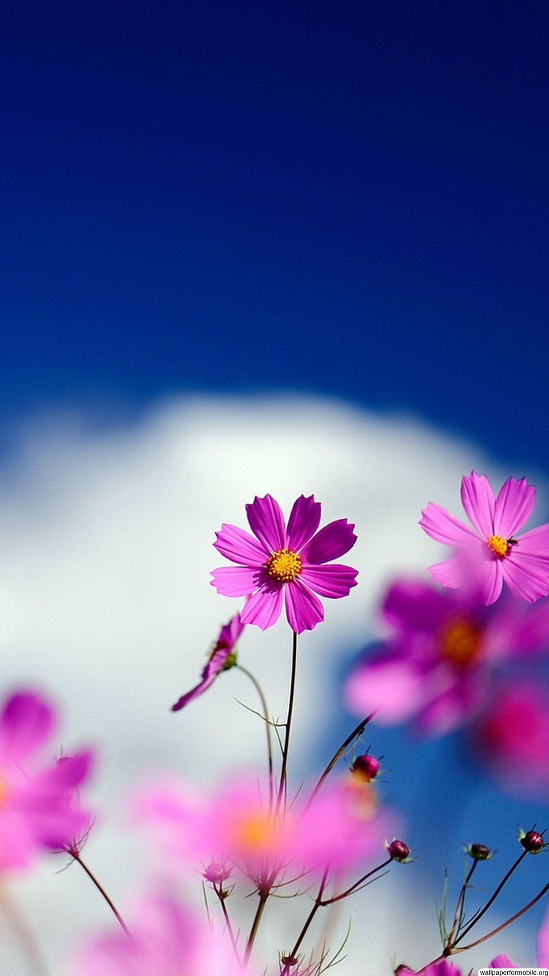 Http Wallpaperformobile Org 12226 Cute Flowers Wallpapers Free