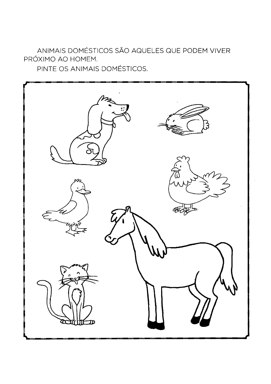 Pintar Os Animais Domesticos Atividades Sobre Animais Animais