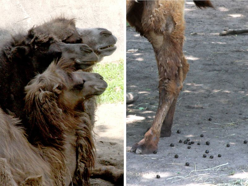 Guess which animal is the worst to clean up after at the