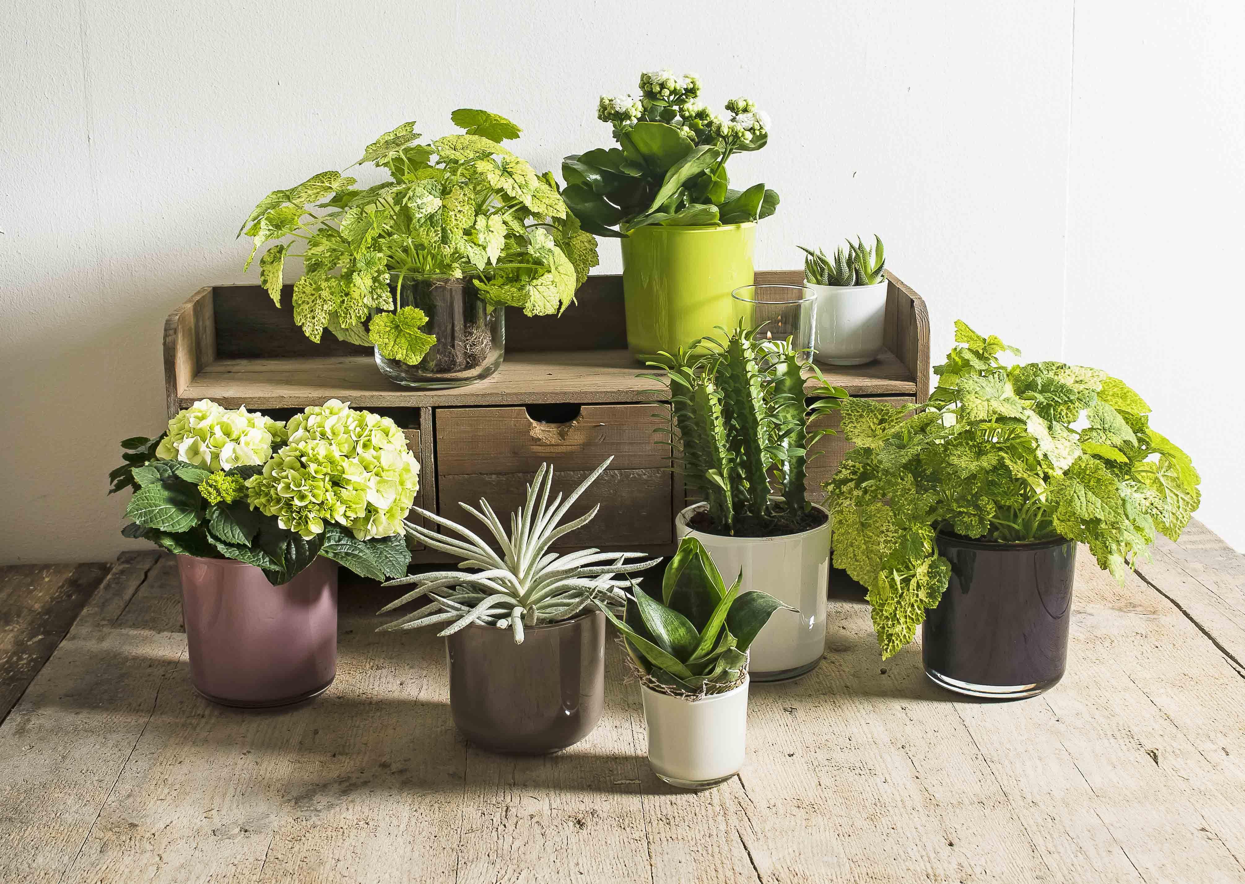 Tuin Potten Groothandel : Sfeer deco tags glas bloemen decoration buiten tuin