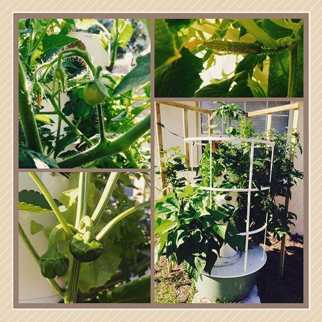 Grow Vegetables Fruits Herbs Aeroponic Tower Garden