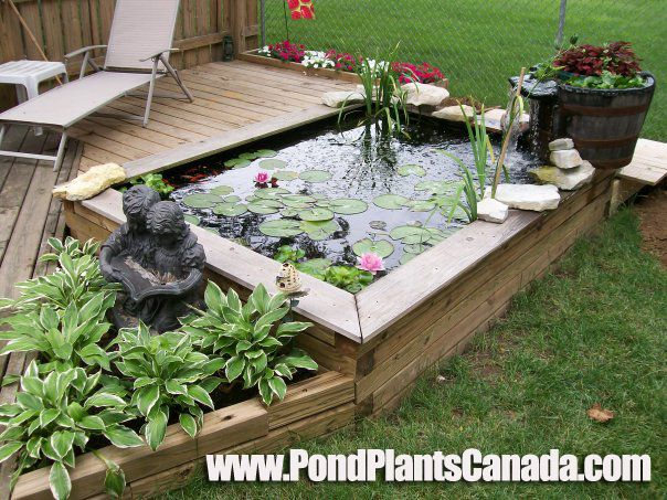 Build a garden pond right off your patio deck water for Koi pond deck