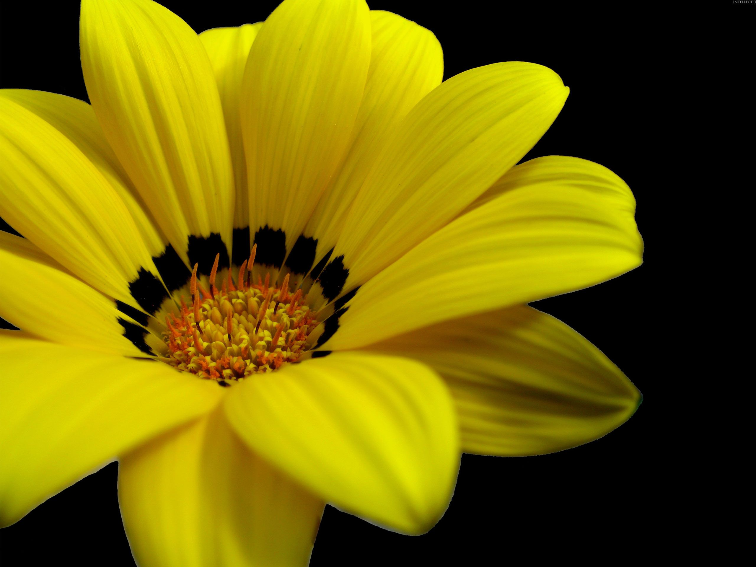 Hd wallpaper yellow flowers - Download Yellow Flowers 14146 2560x1920 Px High Resolution