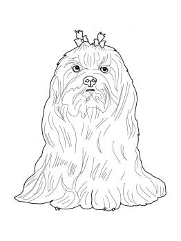 Maltese Dog Projects to Try