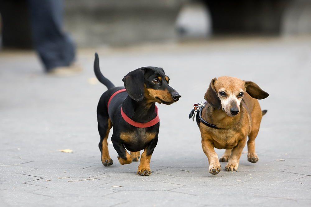 Let Me Introduce Myself By Vladimir Gramagin On 500px Dog Care