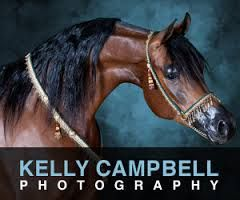 Image result for arabian horse photographers