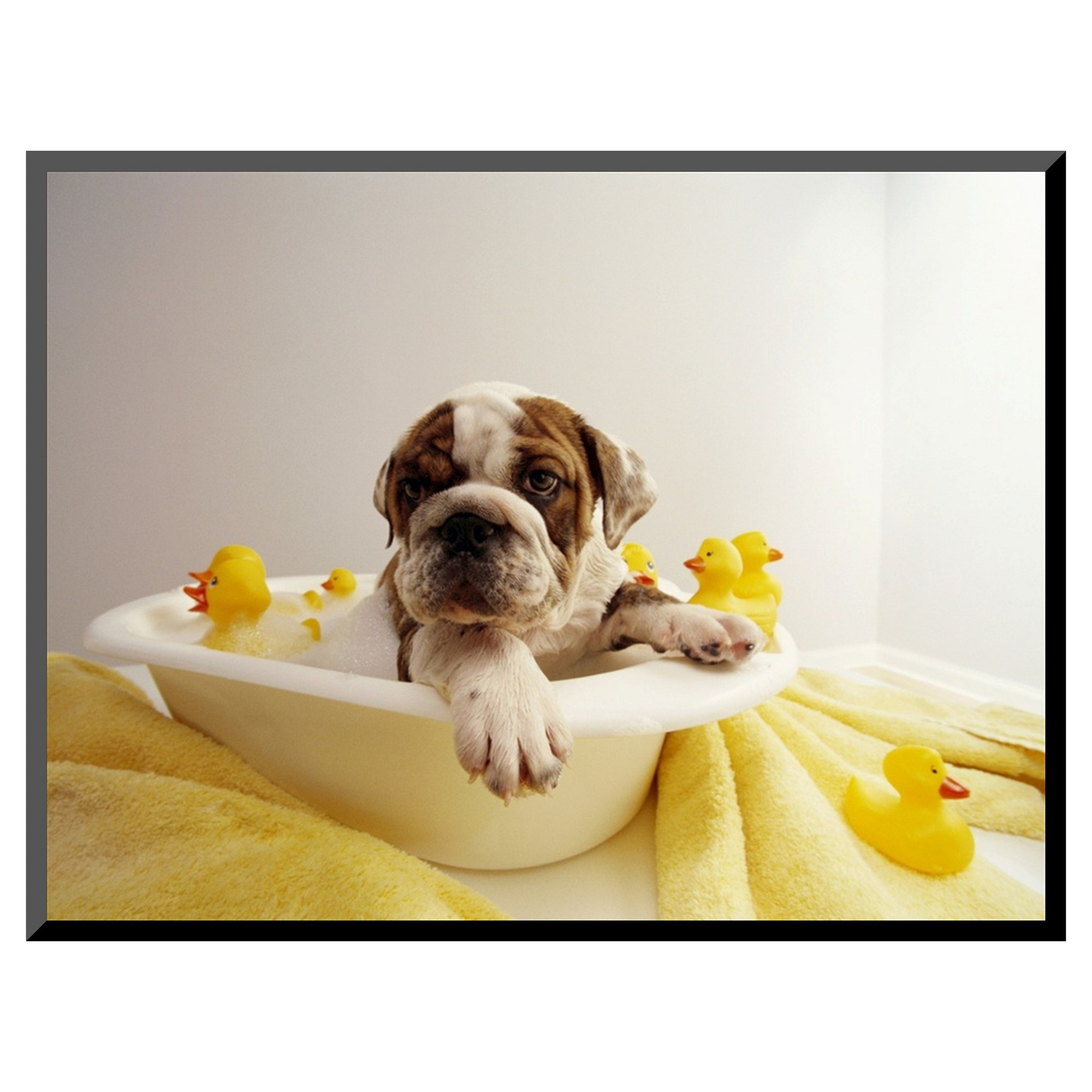 Art Com Bulldog Puppy In Miniature Bathtub Bulldog Puppies Pets