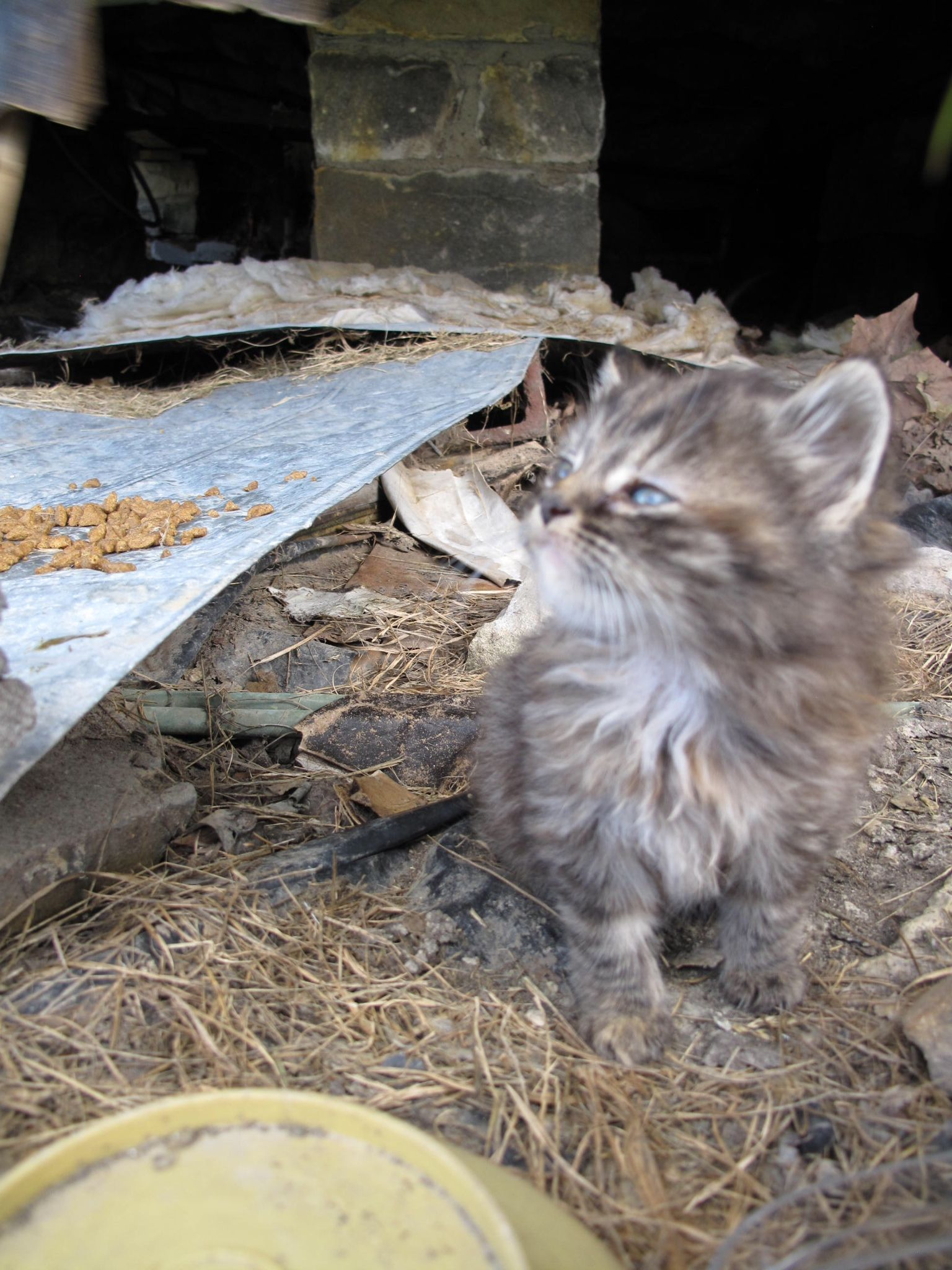 Gutter Punk Kitten Gutter Punk Kitten Cats