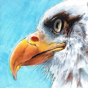 Coloring a Bald Eagle with Copic Markers | Copic Marker – U.S. & Canada
