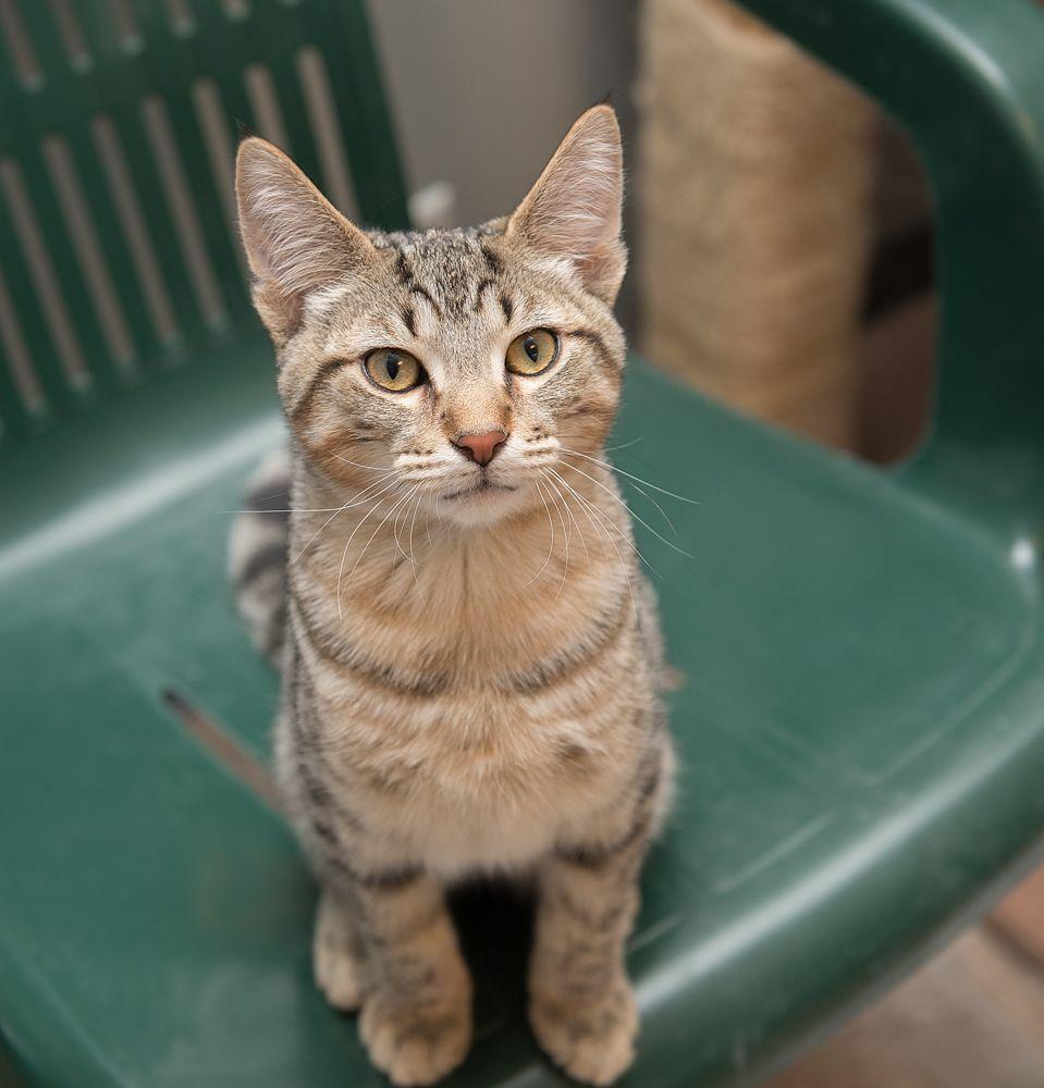 Professional Pet Sitter Organizations