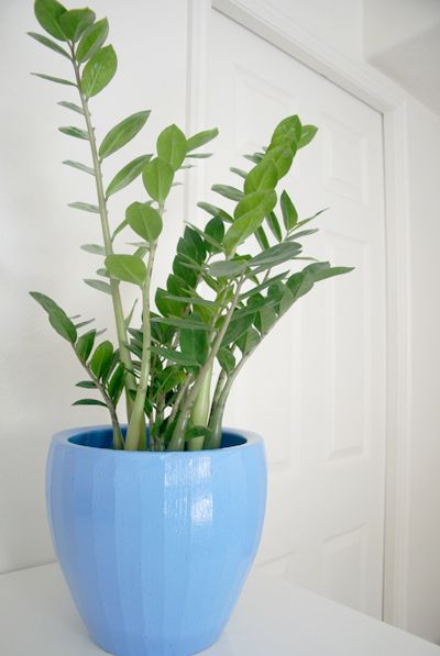 The Breathtaking Benefits Of Houseplants Household
