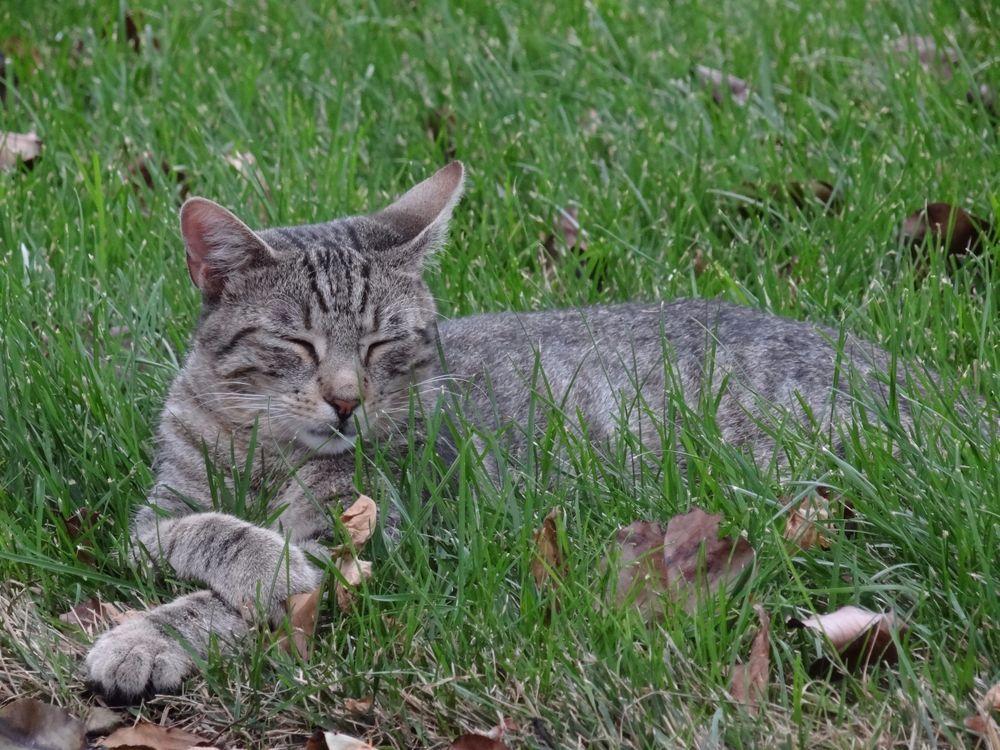 HELP FEED VET RESCUED CAT KITTEN IN GRASS FERAL CAT RESCUE