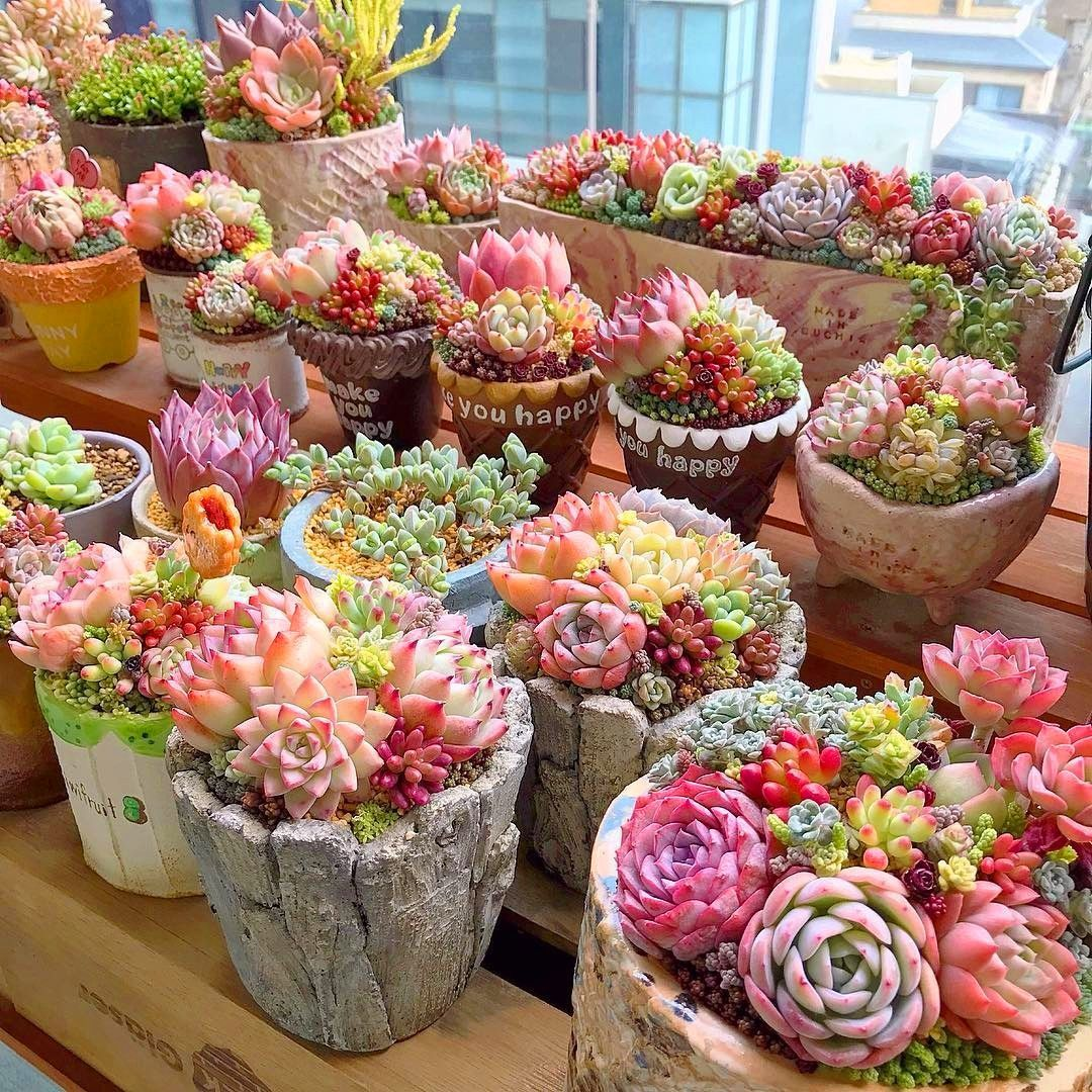 Photo of 60+ Amazing Succulent Planters Instantly Beautifying Your Home #succulents 60+ A…