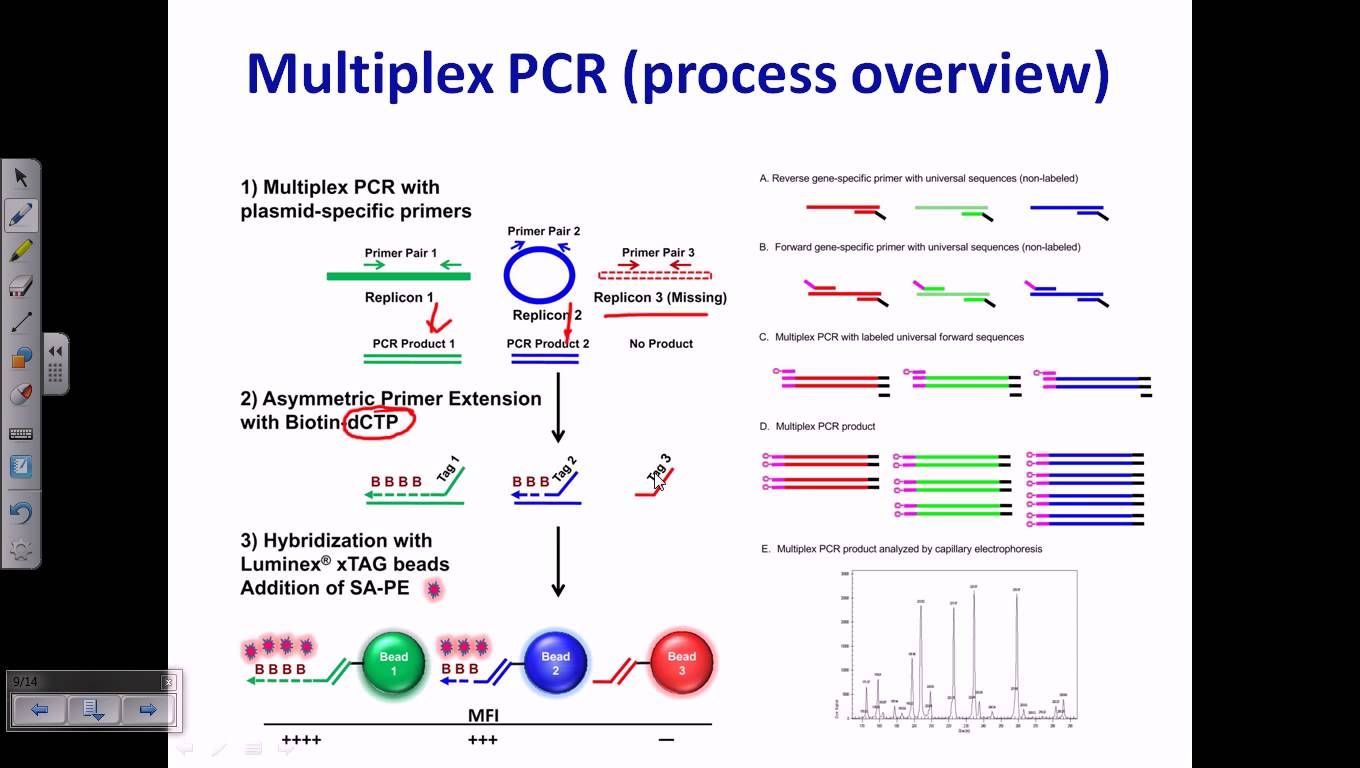 e3ac0f304f90edcaf731d878b1d7d3f3 - Real Time Pcr Principle And Application