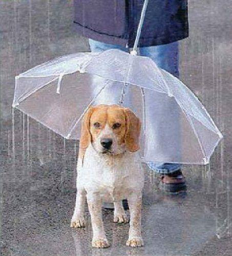 ペット用 傘 小型犬 中型犬くらいまで わんちゃんお散歩用傘 雨の日の散歩も大喜び 宝や Https Www Amazon Co Jp Dp B00dlutyvc Ref Cm Sw R Pi Dp X Lcj0ybwvaa1de ペット 犬 散歩 犬