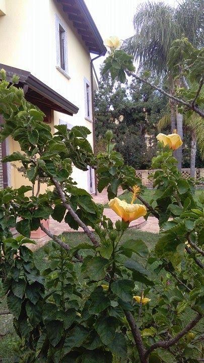 Il Bed Breakfast Villa Magnolia Si Trova A Trappitello Frazione