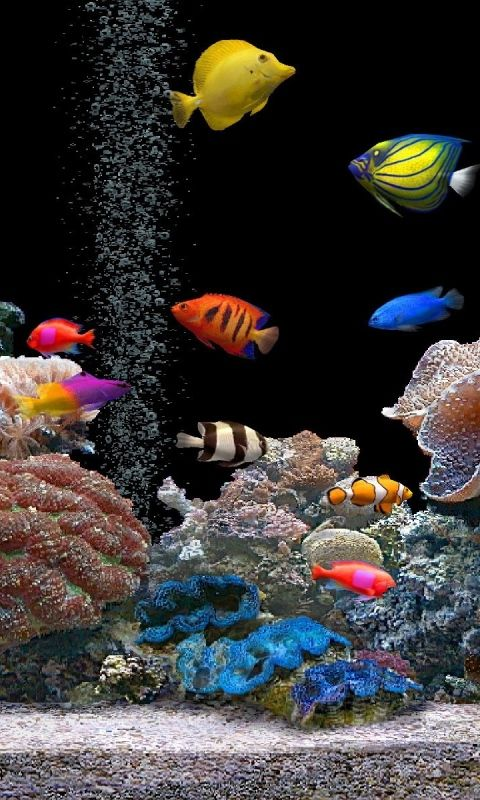 Tropical Fishes Tropical Fish Wallpapers Hd Wallpapers Ocean