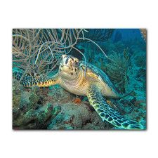 Turtle by Christopher Doherty Photographic Print on Canvas