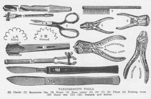 victorian surgical cabinets - Google Search