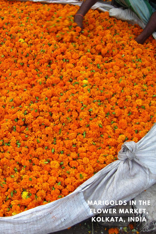 Marigolds In The Flower Market Kolkata In 2020 Flower Market Colorful Flowers Flowers