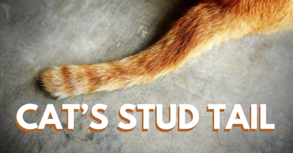 What To Know And What To Do About Cat's Stud Tail Dog