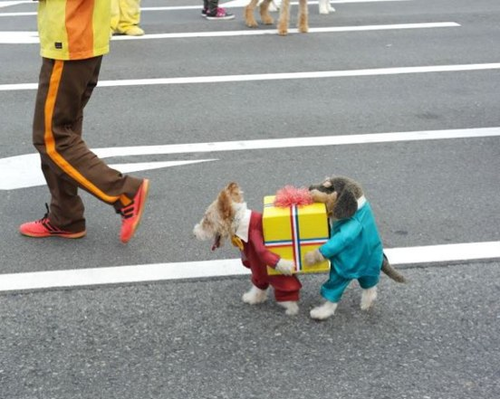 a dog dressed as two dogs carrying a gift. im dyyyyying. hahaha.