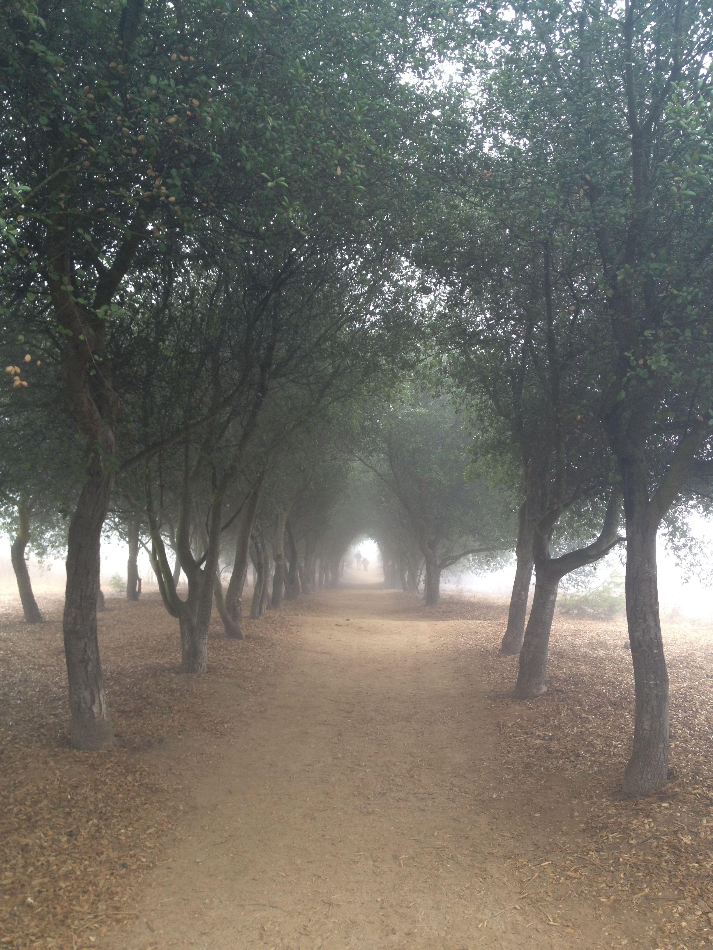California Oaks line the trail head at Iron Mountain near ...