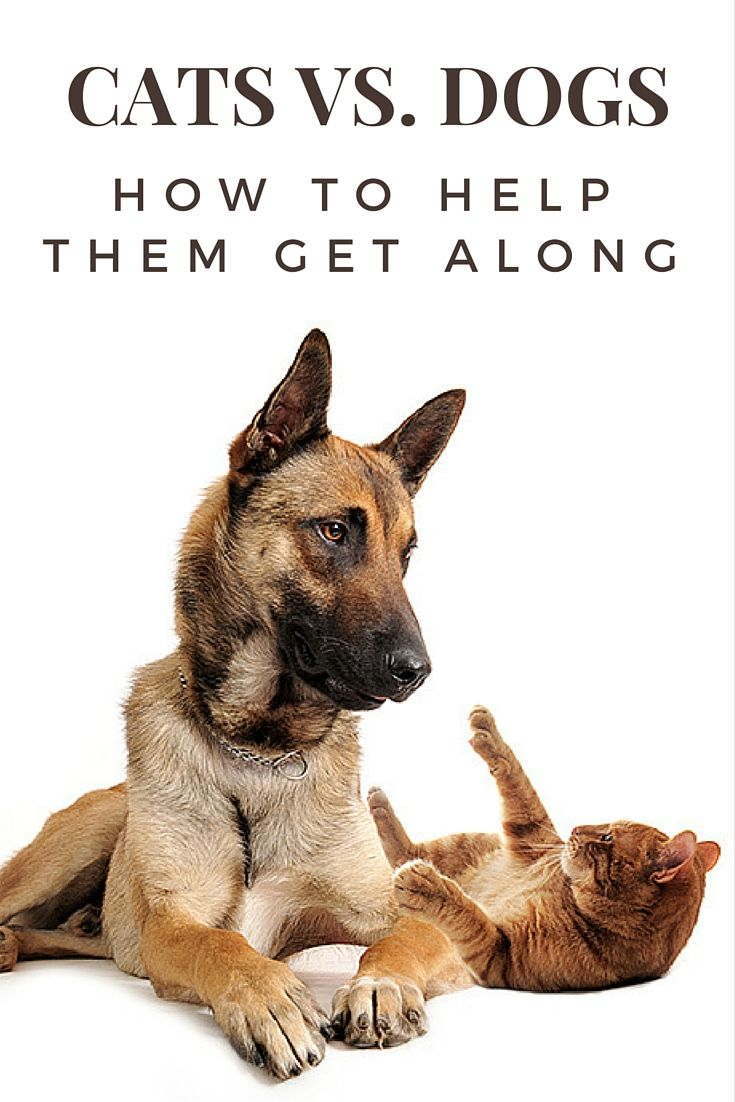Cats vs dogs how to help them get along cat vs dog