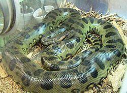 Top 10 ular terbesar di dunia hewan july 08 2017 at 0236pm top 10 ular terbesar di dunia hewan july 08 2017 at 0236pm reheart Images