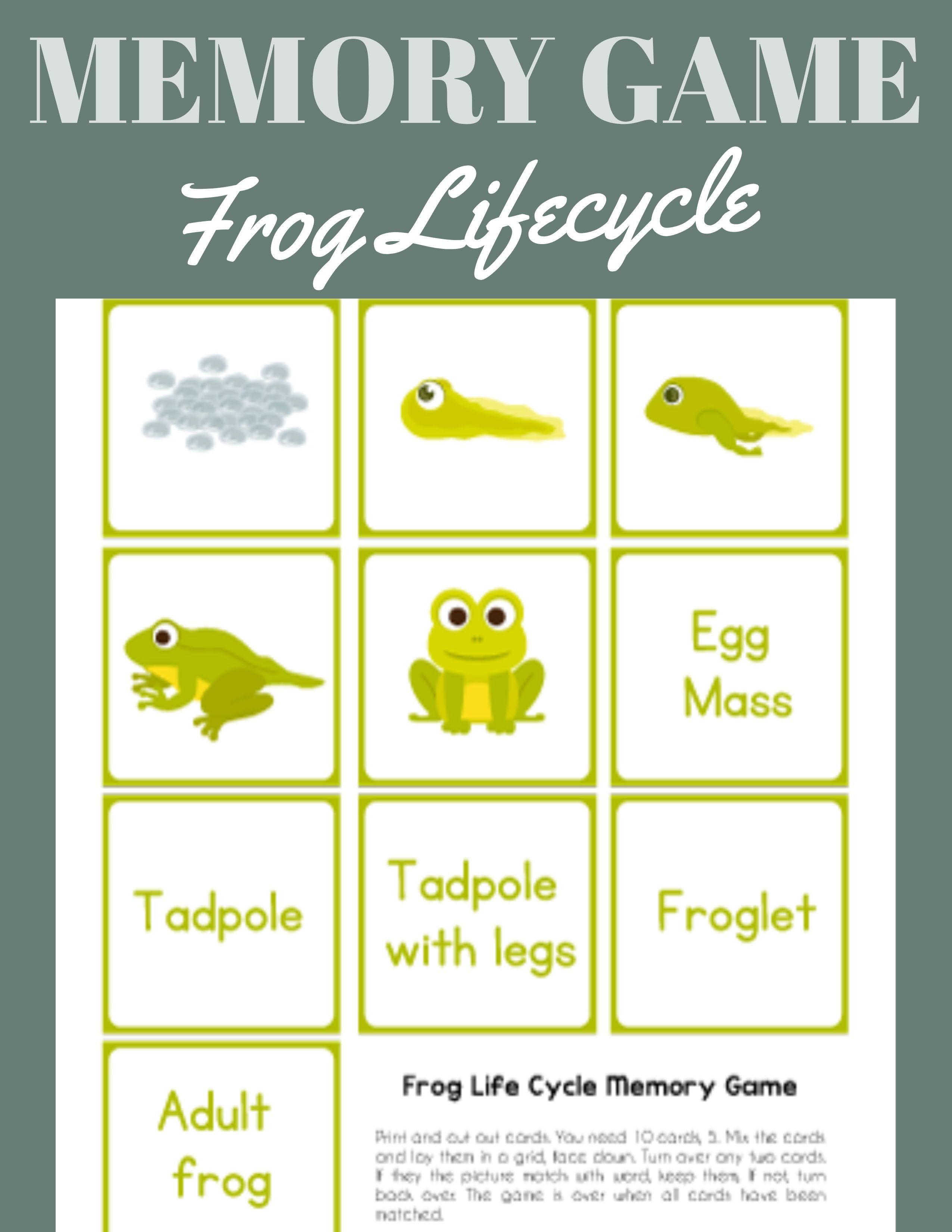 Frog Life Cycle Printable Memory Game