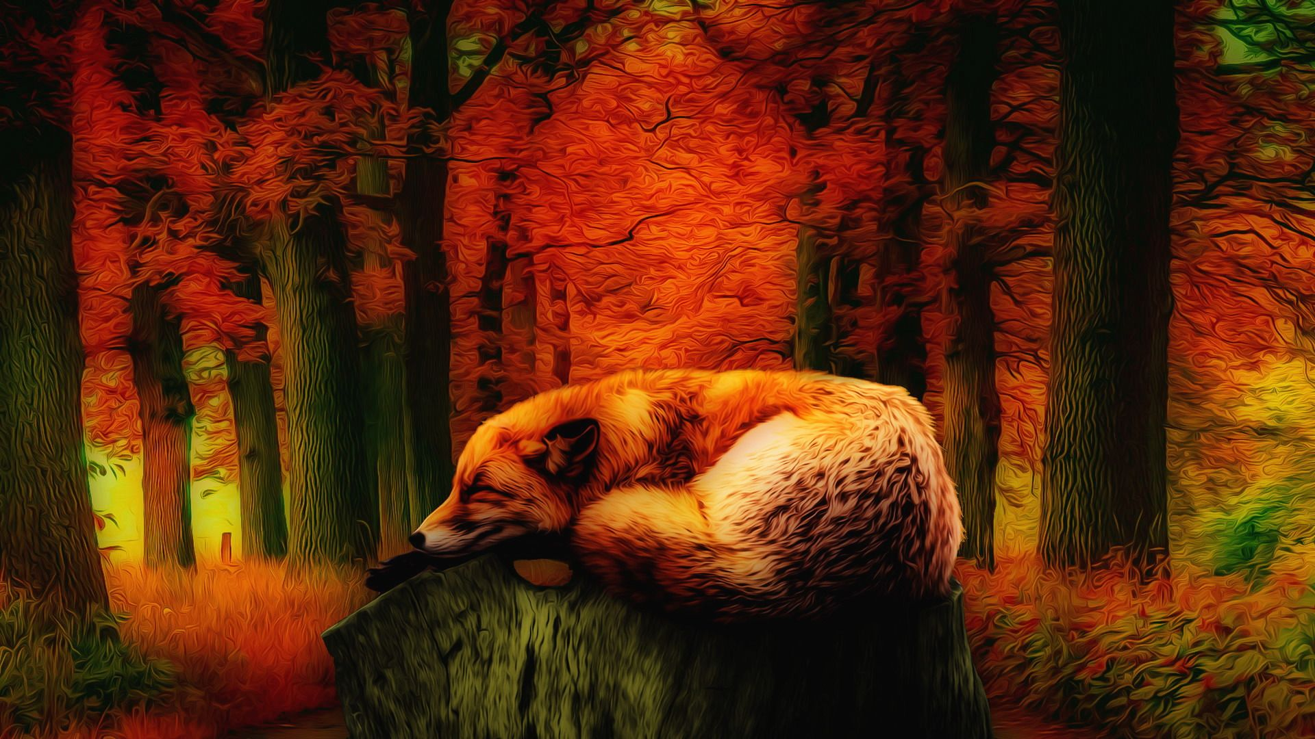 Resting Fox wallpaper[19201080]