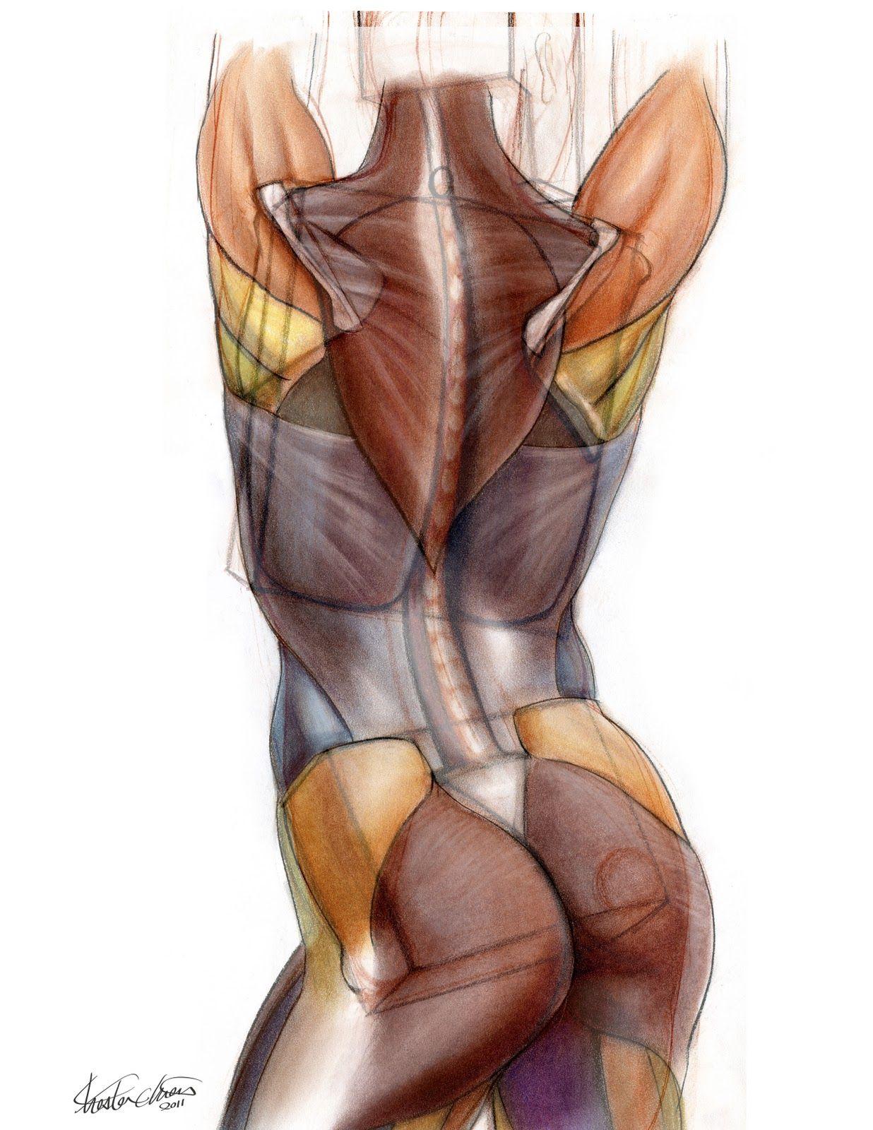Chester Chien: Study of Human Anatomy via PinCG.com | Anatomy ...