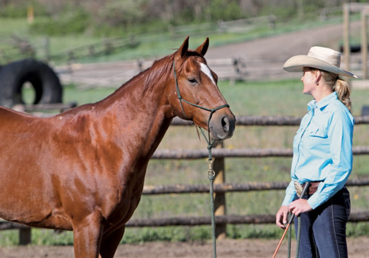 Harmonize your horsemanship horse training centered