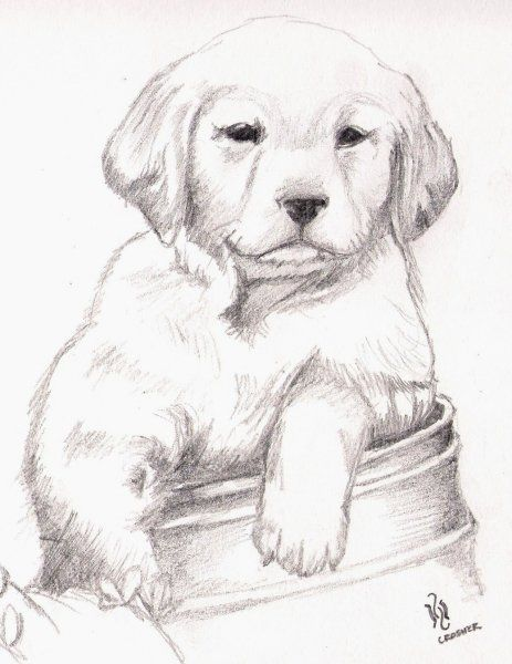 Animales Para Dibujar A Lapiz Imagui Perros Dibujos A Lapiz
