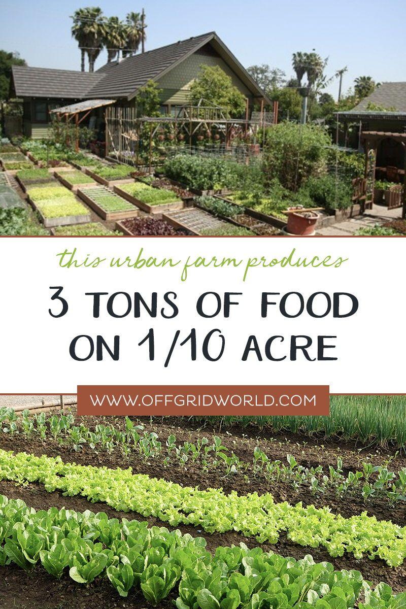 60 000lbs Of Organic Food Per Acre Off Grid World In 2020 Organic Vegetable Garden Organic Gardening Books Organic Gardening Tips