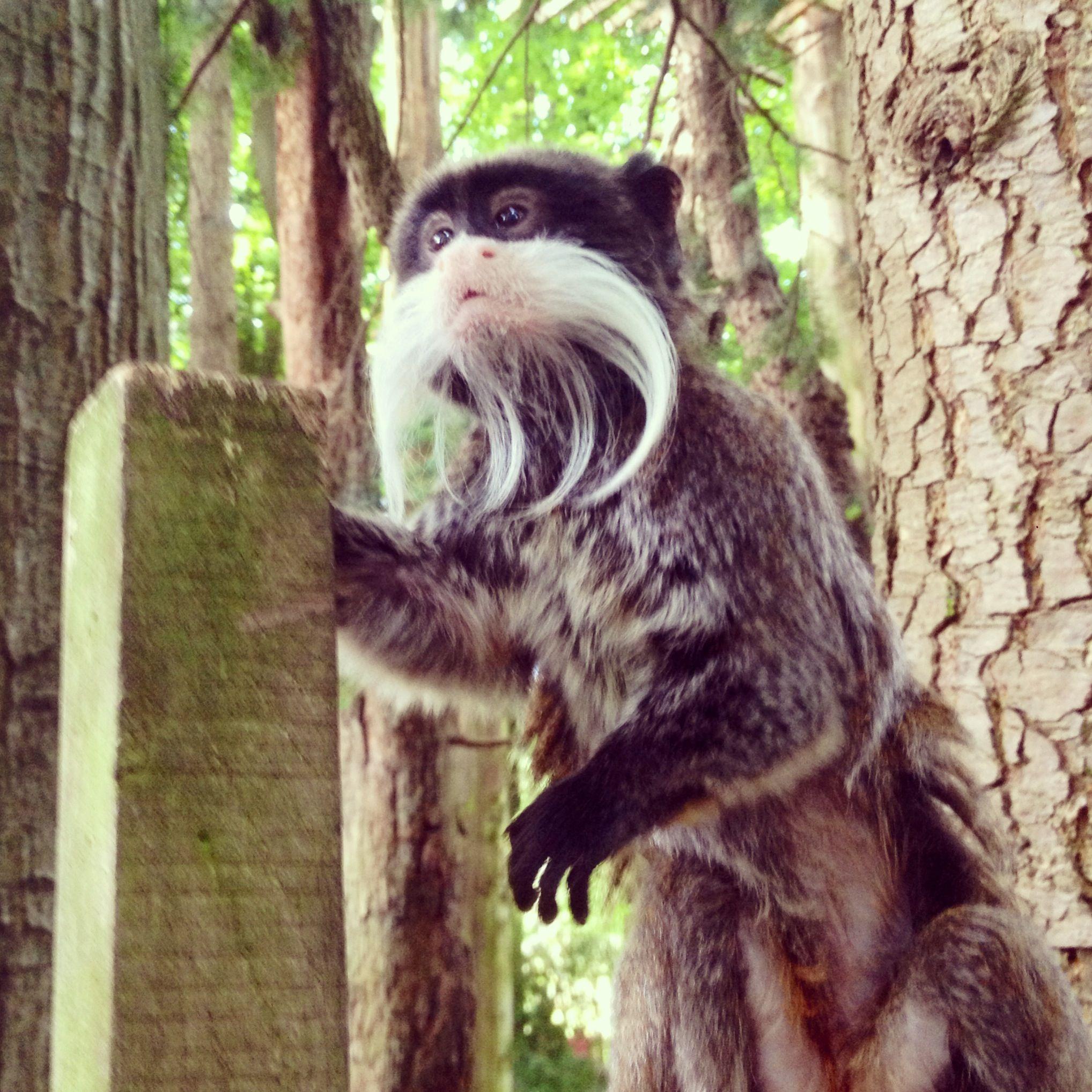 Nog een aaaaaaaaaaaawwwpje! #apenheul