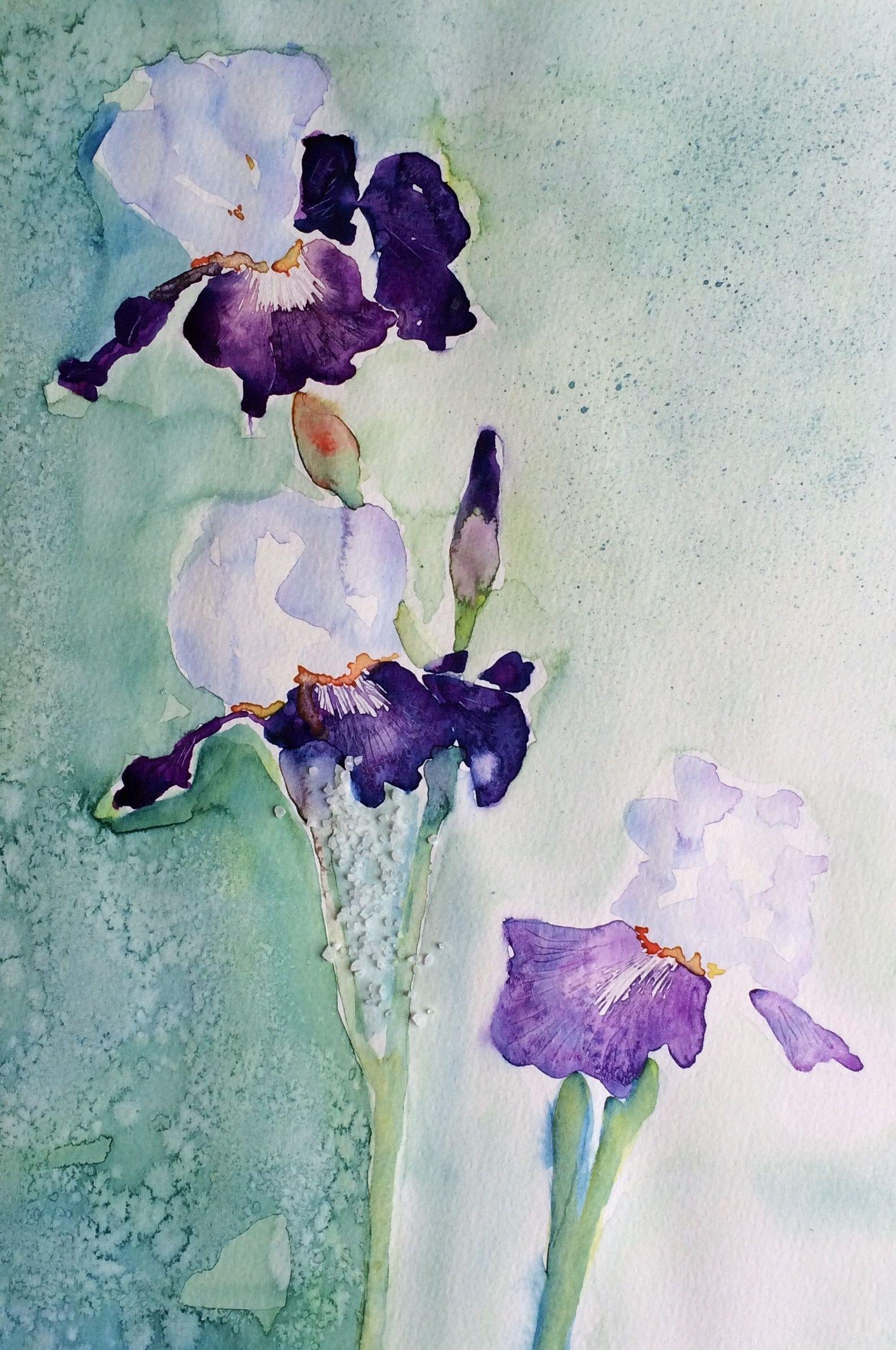 Aquarelle Iris Bleu Maxencebignier Aquarelle Peinture Et