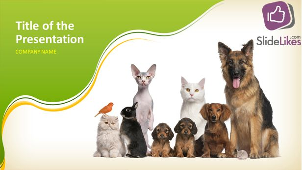 Are You An Animal Lover If Yes Then This Animal Powerpoint