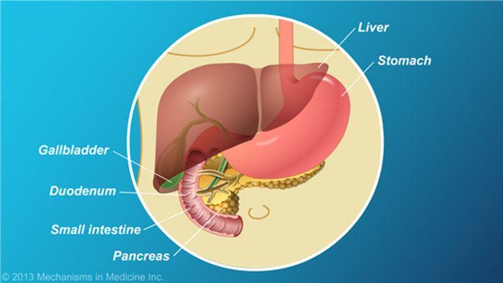 Where is the Pancreas   Medicine >>Pancreas   Pinterest   Anatomy ...