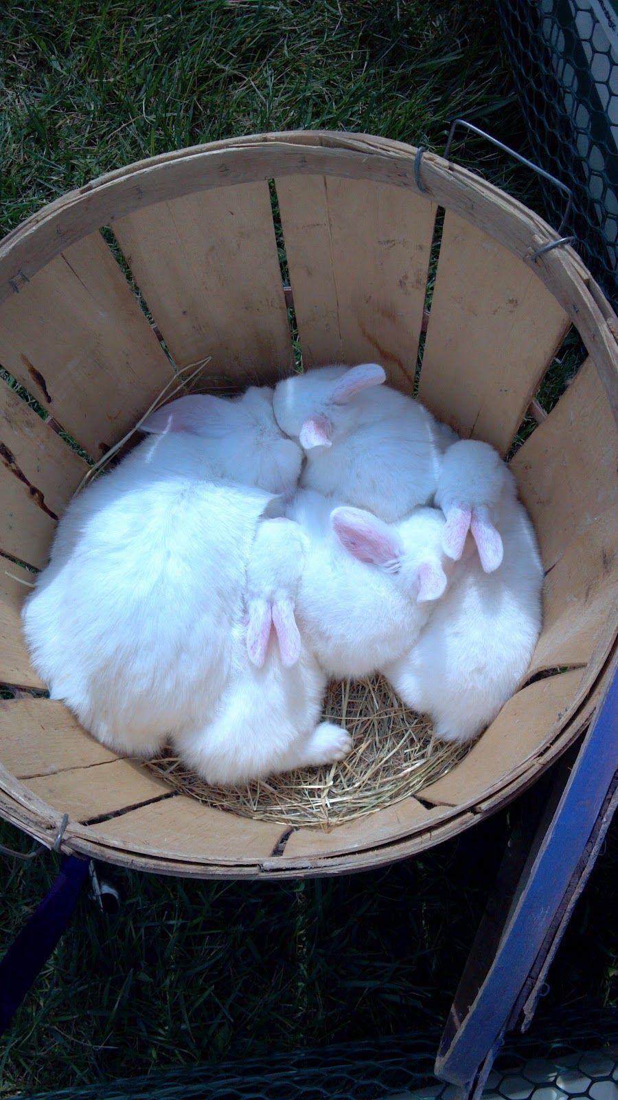 Bucket-o-bunnies