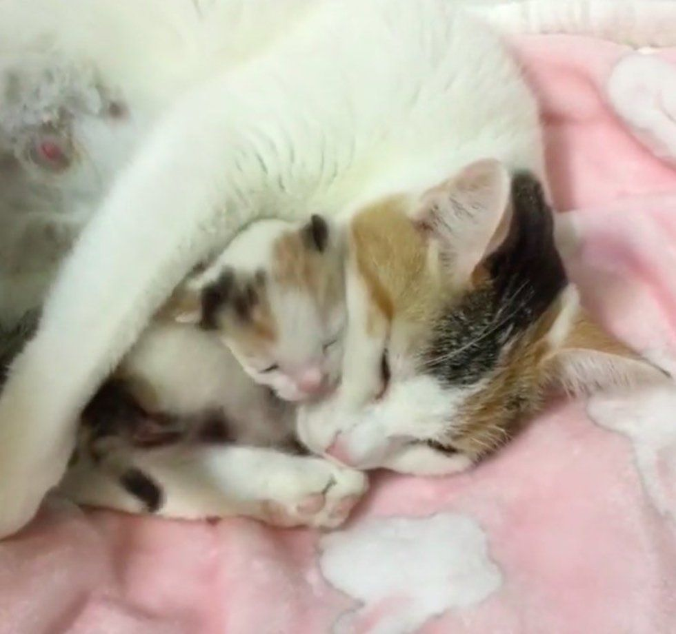 Cat Mama And Her Only Kitten Saved From Shelter She Can T Stop Hugging Her Baby Mama Cat Cat Mom Pregnant Cat